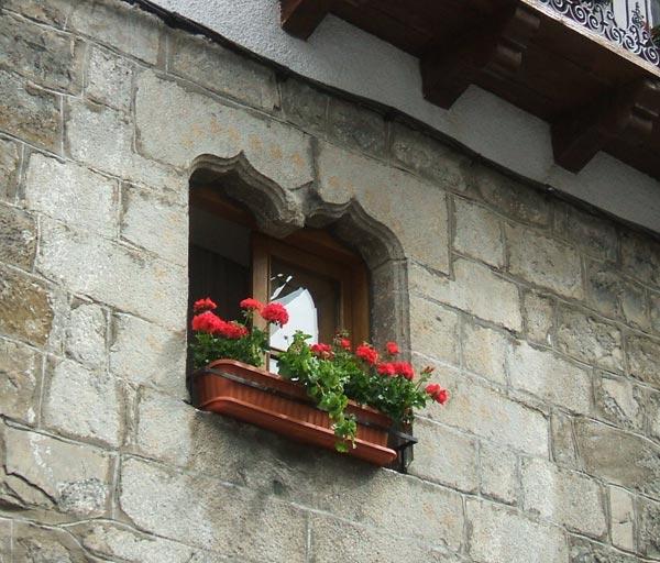 Ochagavia / Otsagabia_ventana germinada
