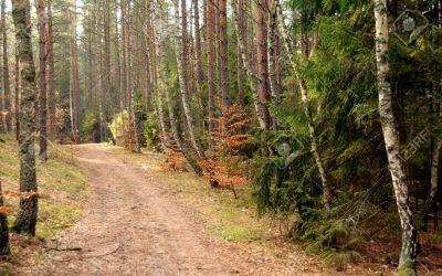 Ordenanza de Tasas y fianzas por la utilización de caminos vecinales y pistas forestales